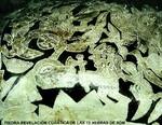 Piedra revelación del Mensaje cuántico de las 12 hebras de ADN de la Humanidad Gliptolítica.